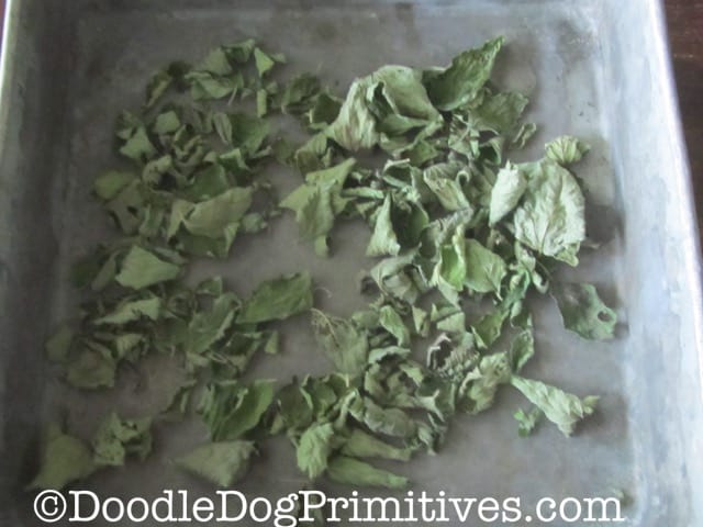 Mint leaves after they are dried
