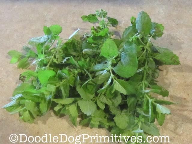 Cut stems of mint