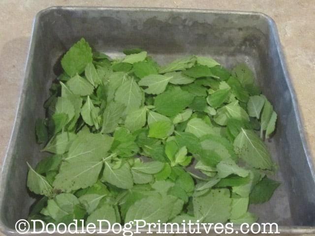 Miint leaves